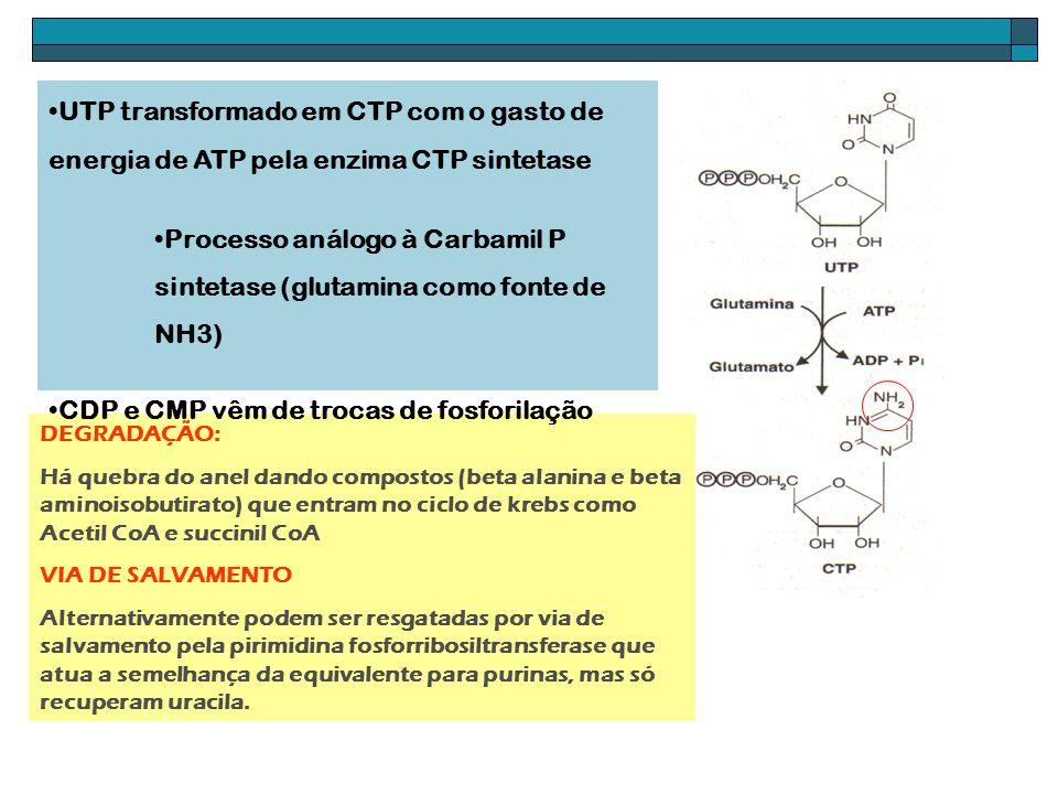 DEGRADAÇÃO: Há quebra do anel dando compostos (beta alanina e beta aminoisobutirato) que entram no ciclo de krebs como Acetil CoA e succinil CoA VIA D