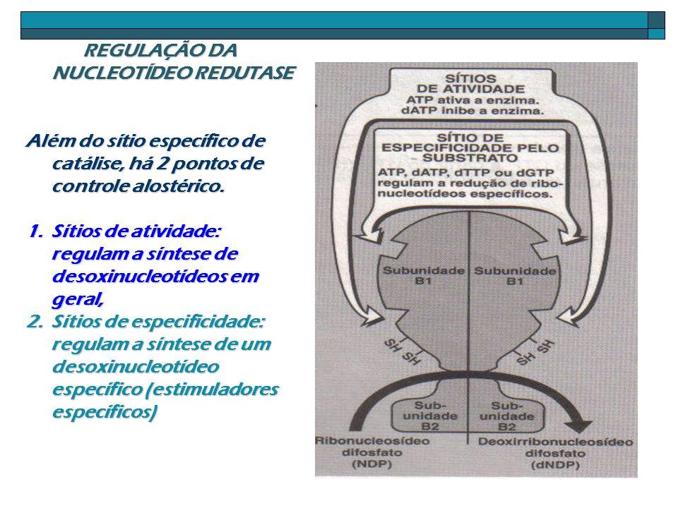 REGULAÇÃO DA NUCLEOTÍDEO REDUTASE Além do sítio específico de catálise, há 2 pontos de controle alostérico. 1.Sítios de atividade: regulam a síntese d