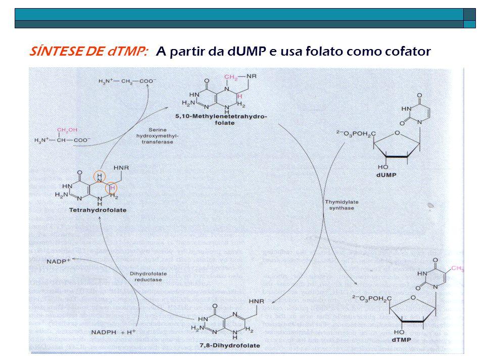 SÍNTESE DE dTMP: A partir da dUMP e usa folato como cofator