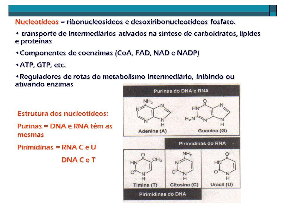 ( desoxi) Nucleosídeos: Adição de um açúcar a uma base ADENOSINA, GUANOSINA, CITIDINA, TIMIDINA E URIDINA (desoxi) Nucleotídeos: mono, di ou trifosfato de nucleosídeos.