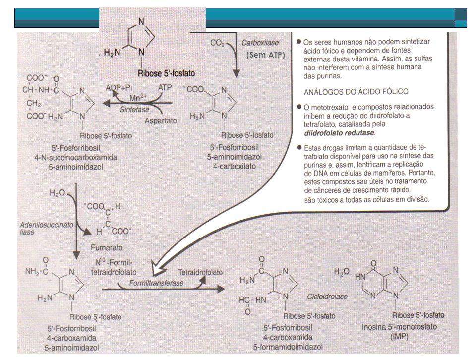 Síntese de 5-fosforribosilamina regulada pelos produtos (AMP, GMP e IMP) e substratos (PRPP, Glutamina) Síntese total requer 4 ATP como fonte de energia Inosina monofosfato: purina-mãe.