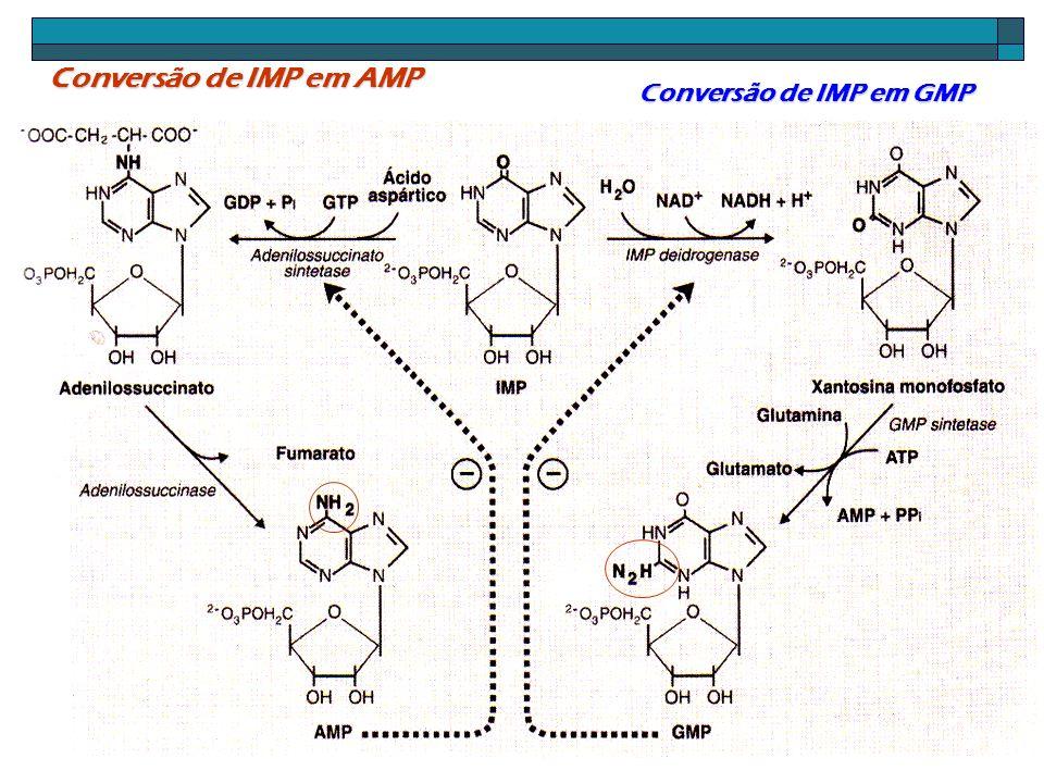 Conversão de nucleotídeo monofosfato em Di e trifosfato AMP quinase.