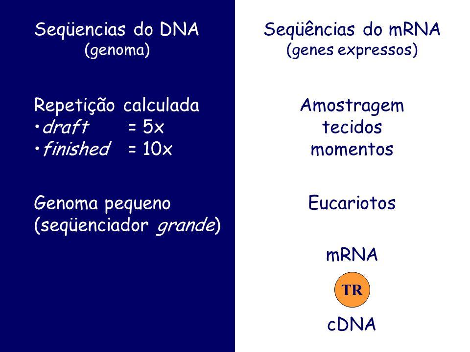 Seqüencias do DNA (genoma) Seqüências do mRNA (genes expressos) Repetição calculada draft = 5x finished = 10x Amostragem tecidos momentos Genoma pequeno (seqüenciador grande) Eucariotos mRNA cDNA TR