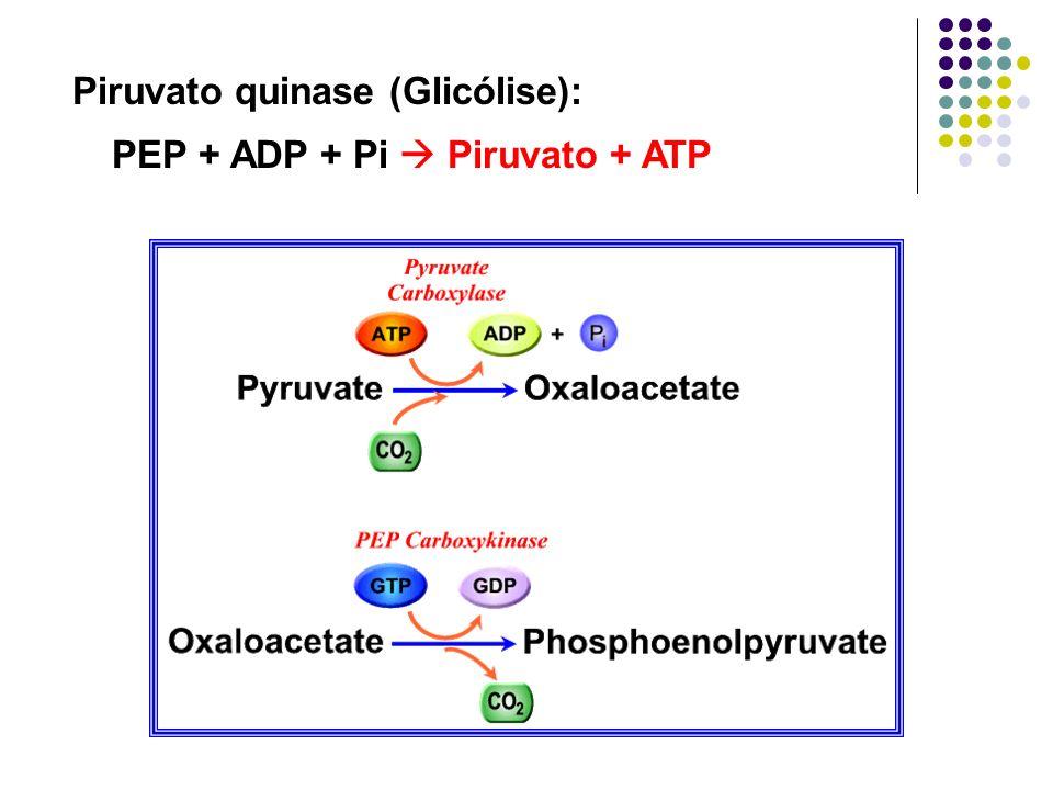 Piruvato quinase (Glicólise): PEP + ADP + Pi Piruvato + ATP