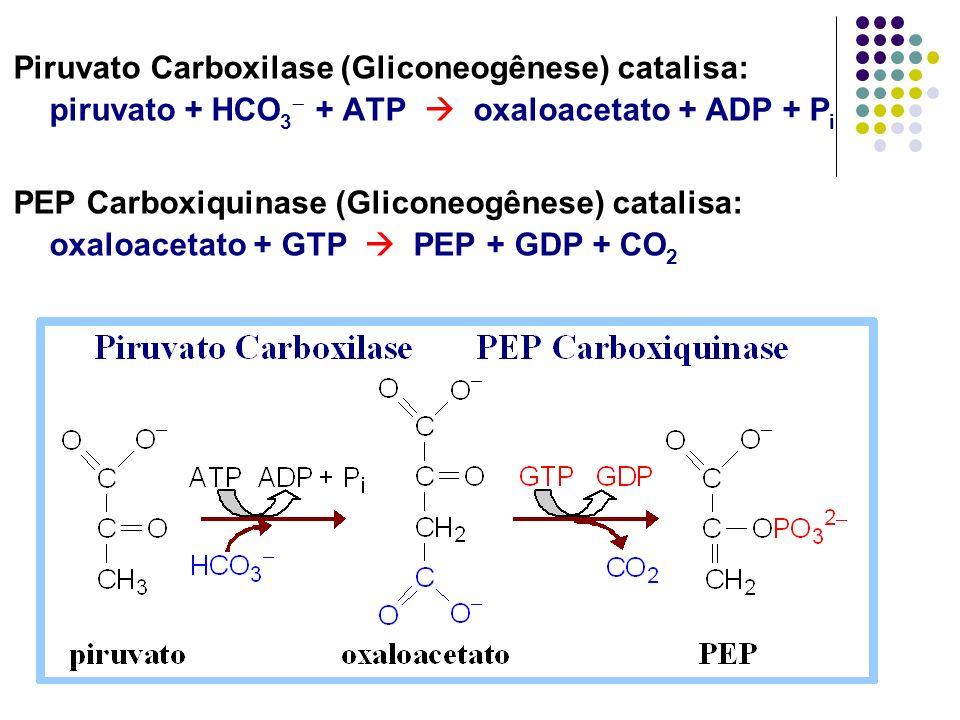 Piruvato Carboxilase (Gliconeogênese) catalisa: piruvato + HCO 3 + ATP oxaloacetato + ADP + P i PEP Carboxiquinase (Gliconeogênese) catalisa: oxaloace