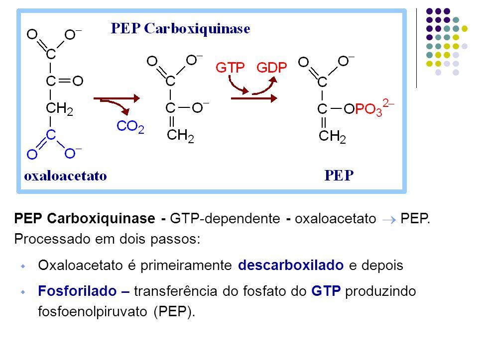 PEP Carboxiquinase - GTP-dependente - oxaloacetato PEP. Processado em dois passos: Oxaloacetato é primeiramente descarboxilado e depois Fosforilado –