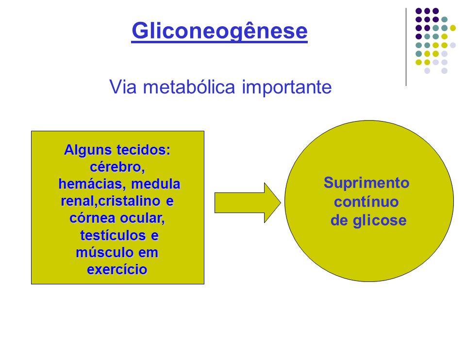 Gliconeogênese Período maior de jejum .