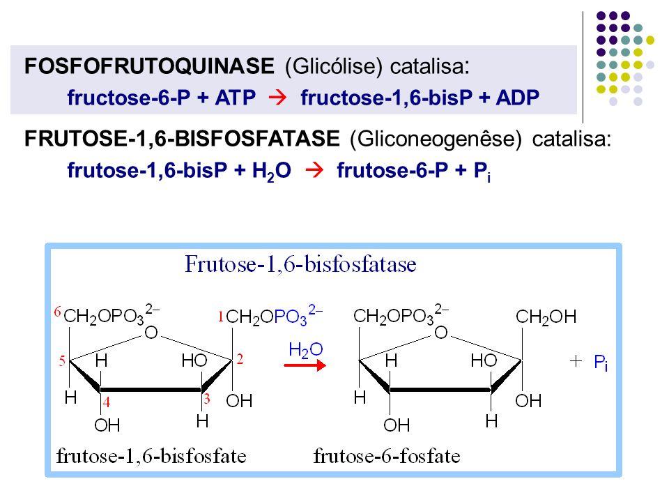 FOSFOFRUTOQUINASE (Glicólise) catalisa : fructose-6-P + ATP fructose-1,6-bisP + ADP FRUTOSE-1,6-BISFOSFATASE (Gliconeogenêse) catalisa: frutose-1,6-bi