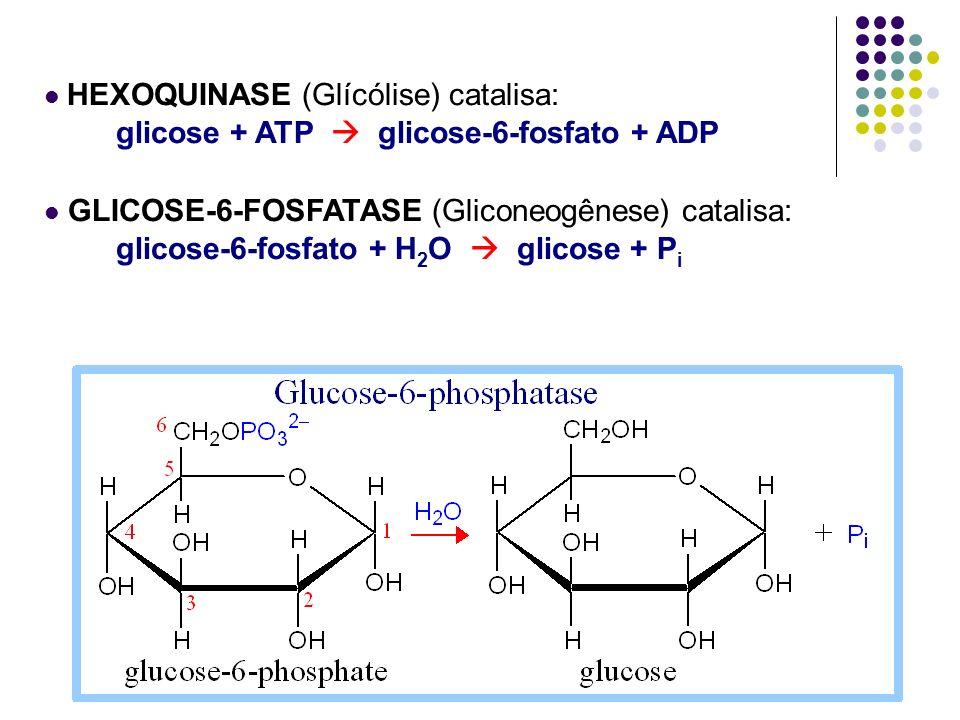 HEXOQUINASE (Glícólise) catalisa: glicose + ATP glicose-6-fosfato + ADP GLICOSE-6-FOSFATASE (Gliconeogênese) catalisa: glicose-6-fosfato + H 2 O glico