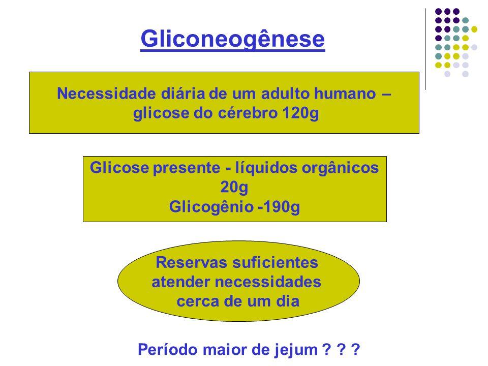 Gliconeogênese Período maior de jejum ? ? ? Necessidade diária de um adulto humano – glicose do cérebro 120g Reservas suficientes atender necessidades