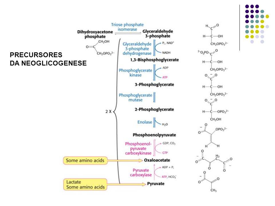 FOSFOFRUTOQUINASE (Glicólise) catalisa : fructose-6-P + ATP fructose-1,6-bisP + ADP FRUTOSE-1,6-BISFOSFATASE (Gliconeogenêse) catalisa: frutose-1,6-bisP + H 2 O frutose-6-P + P i