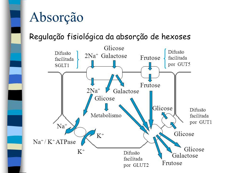 Proteína Macromolécula formada por até 20 aa diferentes unidos por ligação peptídica.
