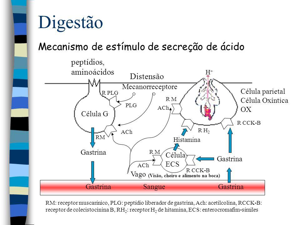 Digestão Controle da secreção de pepsinogênio R CCK-BR MR PIV R- RST Gastrina, CCK ACh PIV, Secretina Adrenalina, noradrenalina Somatostatina Ca + PKCPKA AMP C FLC DAGIP 3 G1G1 Pepsinogênio AC HCl pepsina
