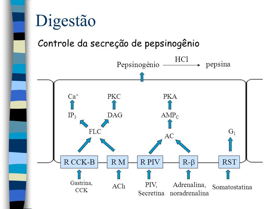 Fundo e antro Controle inibitório da secreção ácida Digestão R ST-2 Célula D Célula G Somatostatina Célula ECS SangueSomatostatina R CCK-B Gastrina CCK H+H+