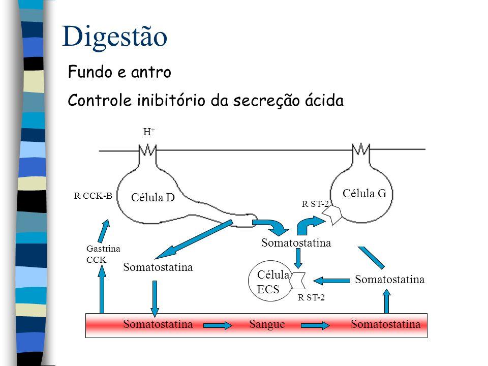 Digestão Duodeno Controle da secreção gástrica e pancreática Secretina CCK Secretina Célula S Célula I Lipídio H+H+ Duodeno Estômago 1 1