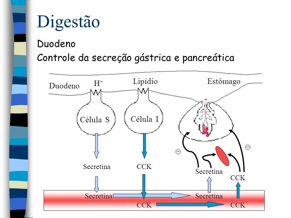 Digestão Intestino Controle da secreção exócrina das células acinares e ductais Secretina secreção do componente aquoso alcalino inibe célula OX CCK secreção de componentes enzimático contração da vesícula biliar Somatostatina inibe secreção enzimática e alcalina exócrina, CCK, secretina e gastrina