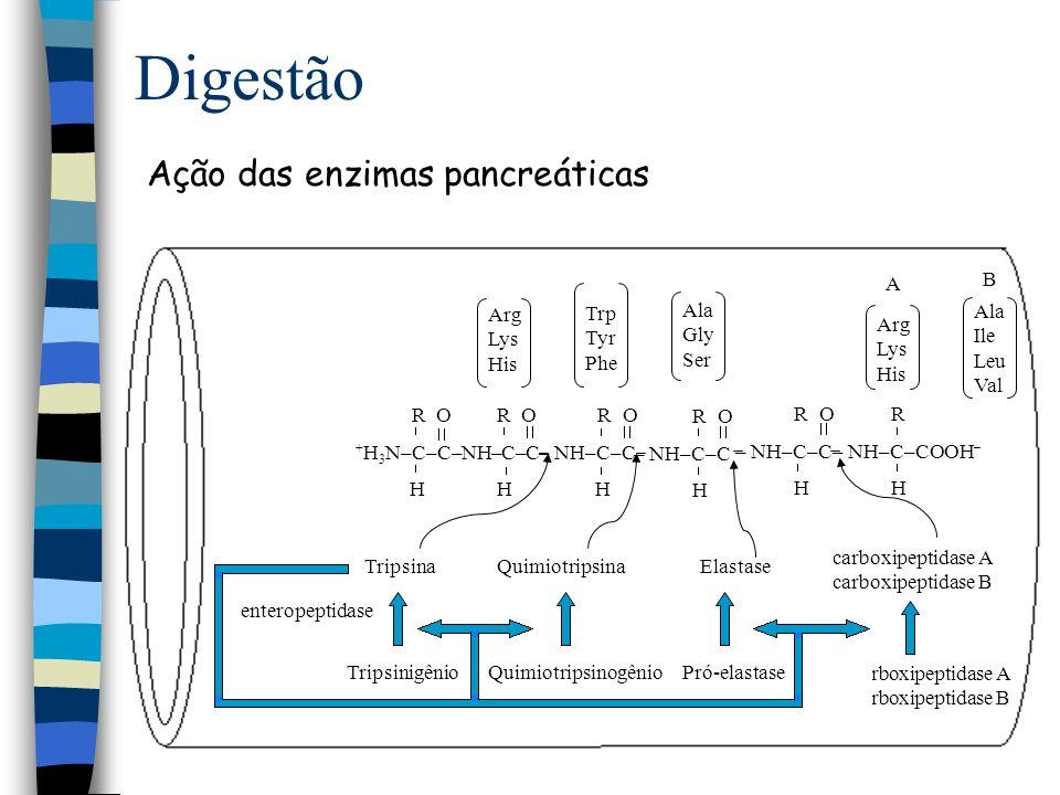 Digestão Enzimas localizadas na borda em escova - jejuno local ativo voltado para a luz intestinal atuam in situ ou na luz intestinal - leucina aminopeptidase - oligopeptidases - dipeptidil aminopeptidase Produtos da digestão aa, dipeptídios, tripeptídios e tetrapeptídios