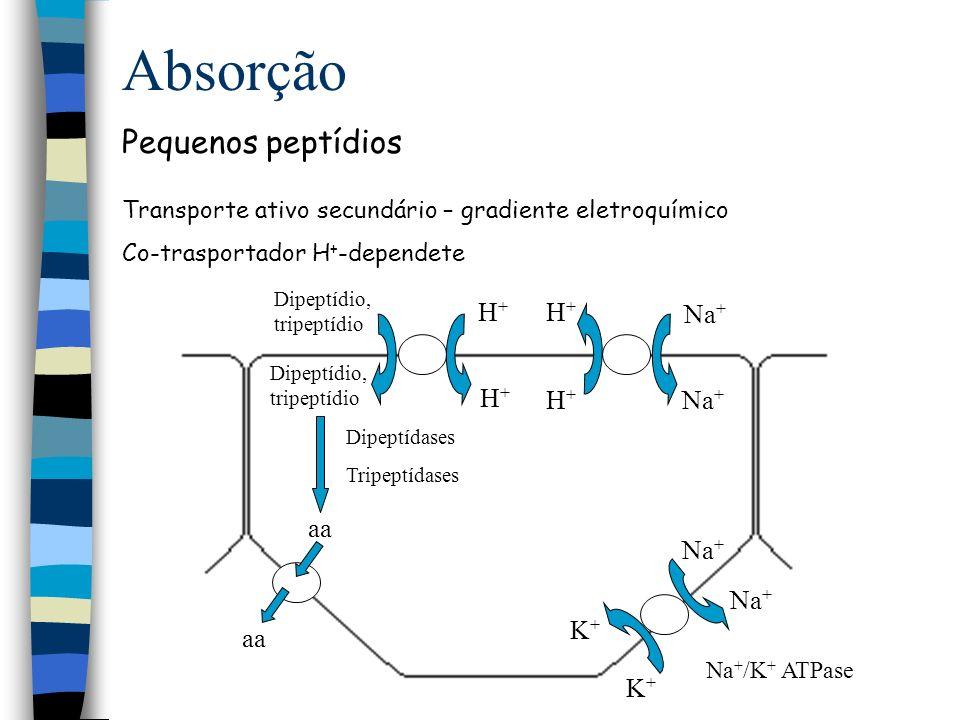 Absorção Absorção de proteínas Quantidades ínfimas podem ser absorvidas intactas Ac presente no colostro e leite materno Ag protéico formação de anticorpos Posterior contato pode causar sintomas alérgicos