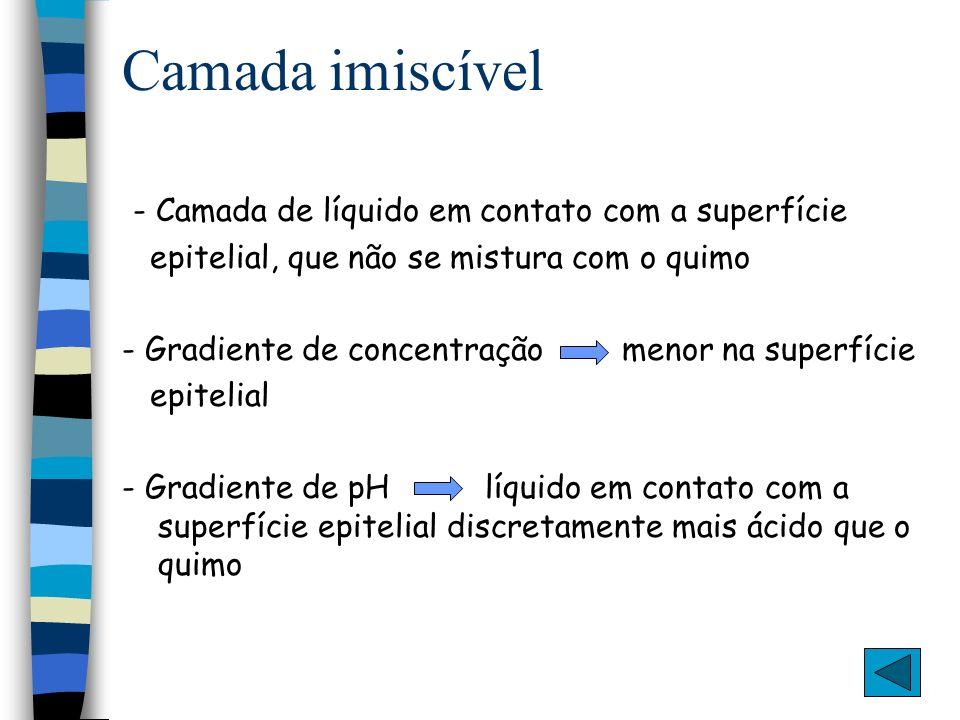 Digestão Absorção e formação dos quilomícrons AG, MG, LFF Col, Vit.