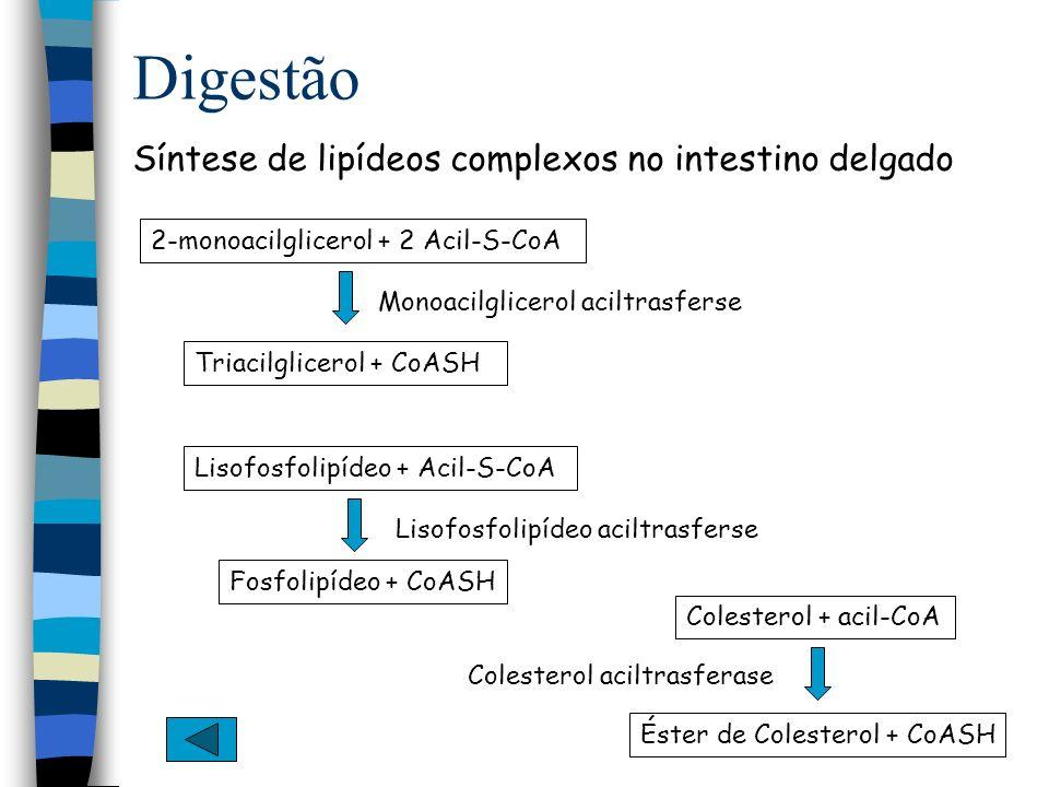 Lipídio Estrutura do Colesterol