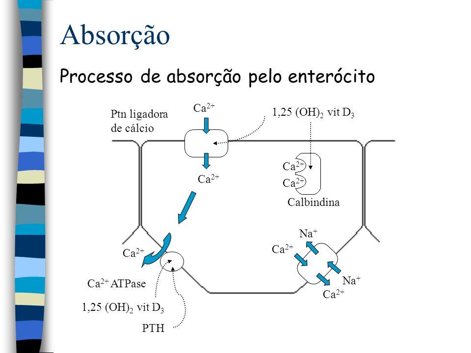 Biodisponibilidade Fatores que influenciam sua disponibilidade pH ácido aumenta sua absorção Ca:P aumento do P diminui a absorção de Ca Fitato, oxalato diminui a absorção Deficiência Crianças raquitismo Adultos osteoporose
