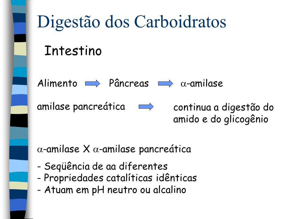 Digestão dos Carboidratos Enzimas da borda em escova Isomaltase intestinal Dissacaridases Maltose maltase glicose + glicose Sacarose sacarase glicose + frutose Lactose lactase glicose + galactose -1,6 glicosidase Glicoamilase isomaltase
