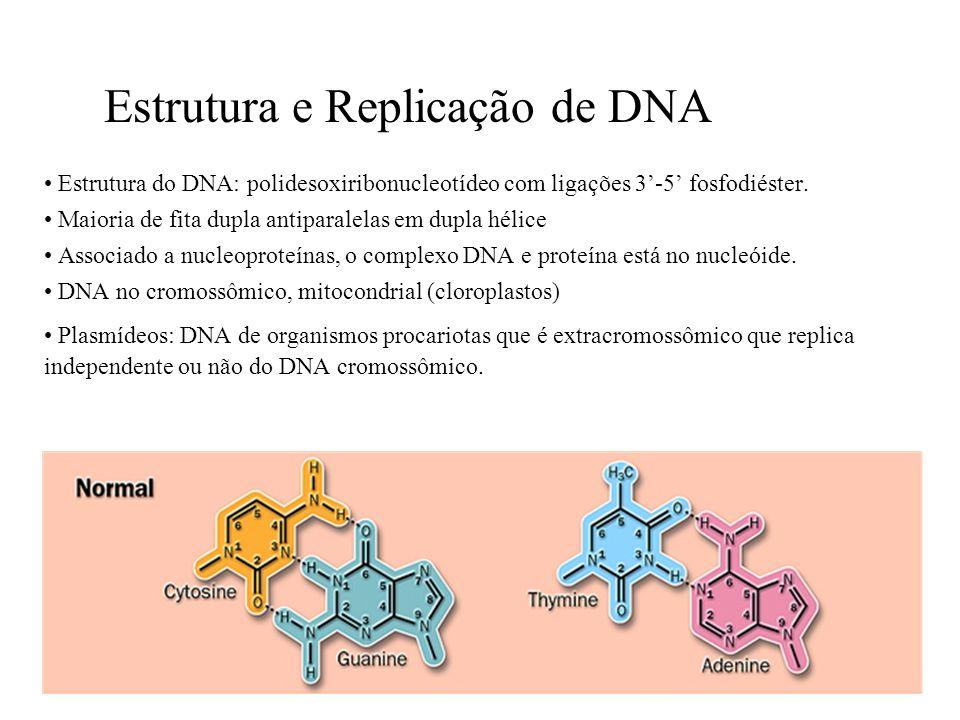 RNA POLIMERASE DE EUCARIOTAS –Necessita de inúmeros fatores de transcrição associados a RNA pol.