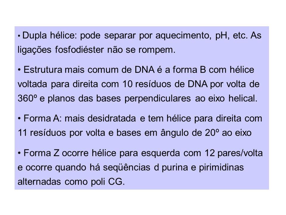 importante prevenir câncer e outras mutações: importante prevenir câncer e outras mutações: 1.DNA polimerase III confere a base recém colocada 2.DNA polimerase I: liga DNA recém sintetizado ao primer de RNA na fita secundária.liga DNA recém sintetizado ao primer de RNA na fita secundária.
