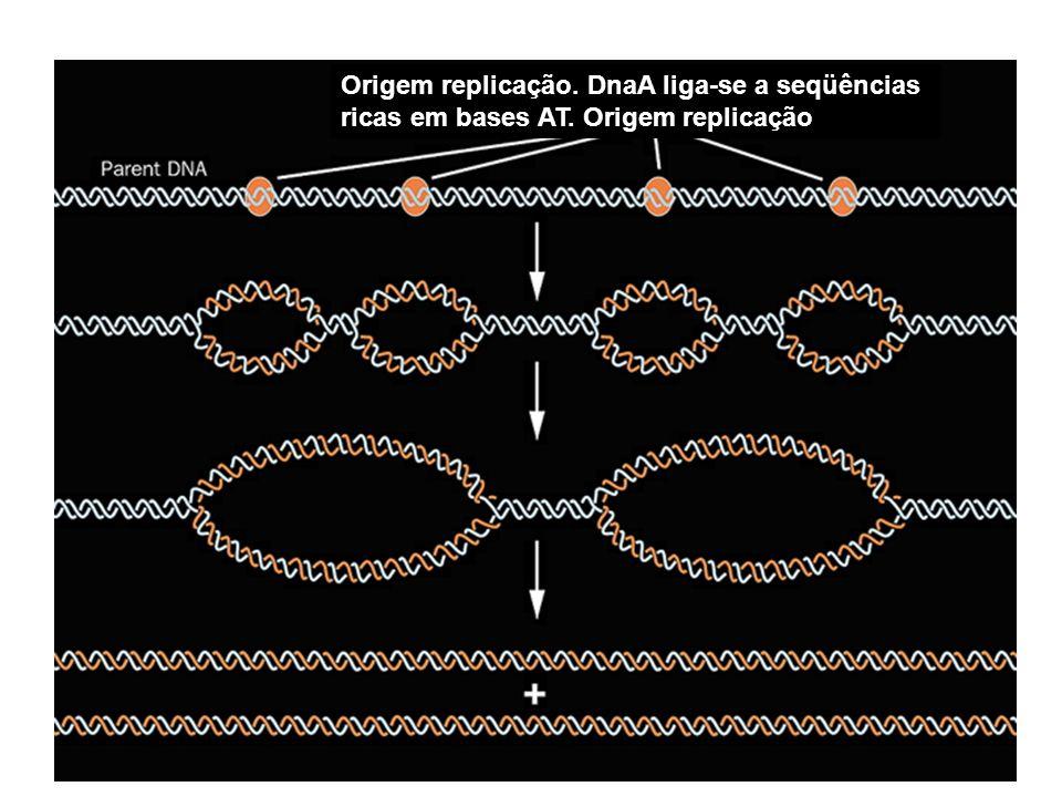 Superdobramento: resolvido pelas topoisomerases I e II: Cortam o DNA para relaxar o superdobramento e depois ligam novamente