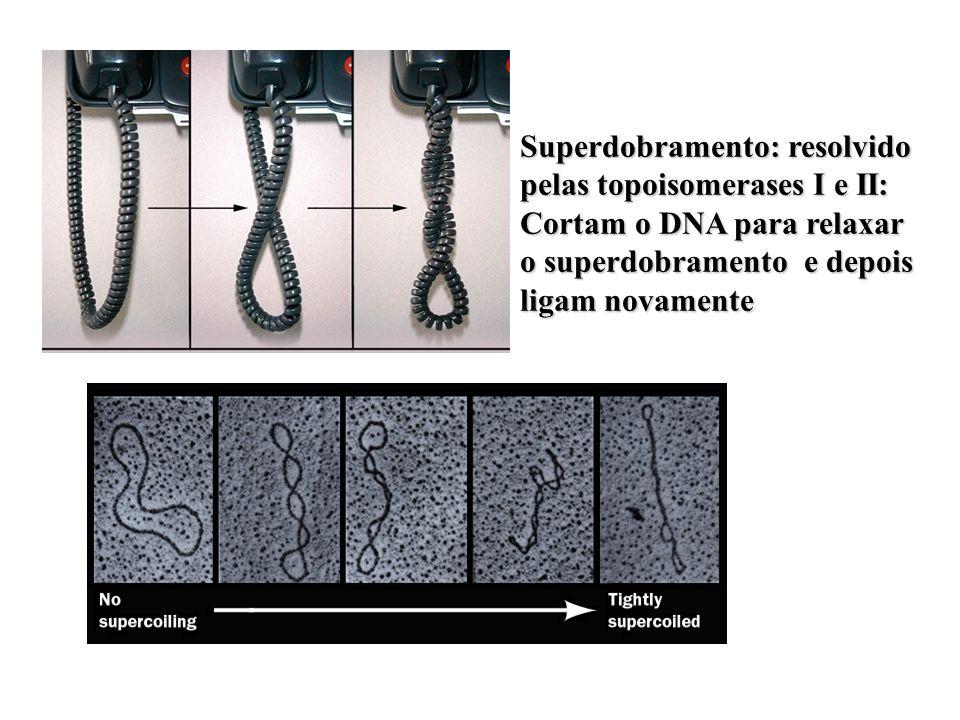 Síntese molde RNA (10 nucleotídeos) Síntese DNA 5-3. Exonuclease 3-5