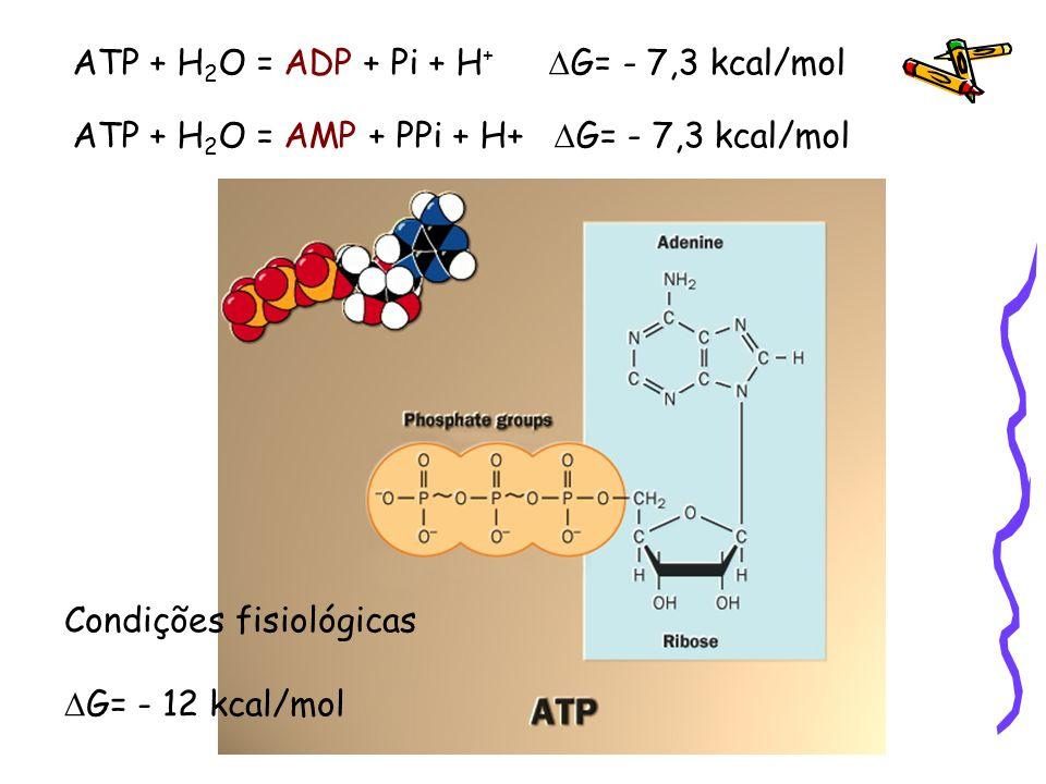 ATP + H 2 O = ADP + Pi + H + G= - 7,3 kcal/mol ATP + H 2 O = AMP + PPi + H+ G= - 7,3 kcal/mol Condições fisiológicas G= - 12 kcal/mol