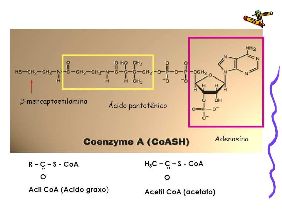 Ácido pantotênico Adenosina -mercaptoetilamina R – C – S - CoA O Acil CoA (Acido graxo ) H 3 C – C – S - CoA O Acetil CoA (acetato)