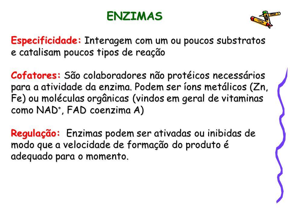 ENZIMAS Especificidade: Interagem com um ou poucos substratos e catalisam poucos tipos de reação Cofatores: São colaboradores não protéicos necessários para a atividade da enzima.