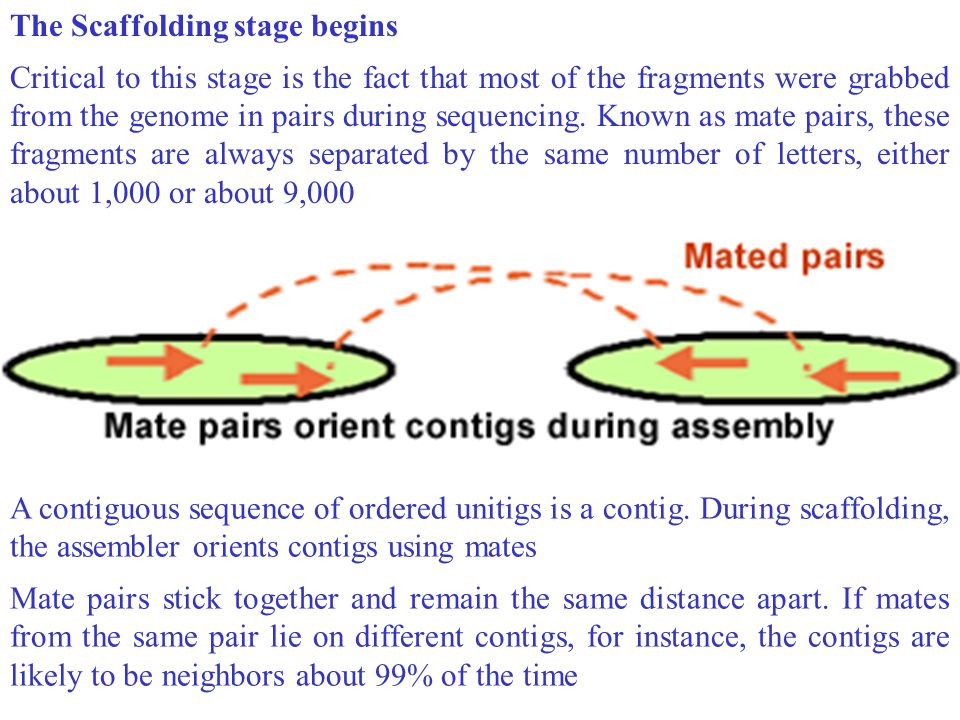 The assembler identifies incorrectly assembled unitigs that spell repeats by looking at the