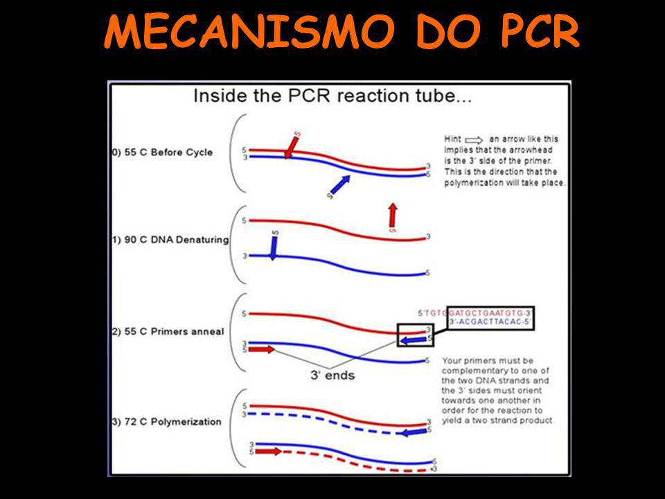 MECANISMO DO PCR