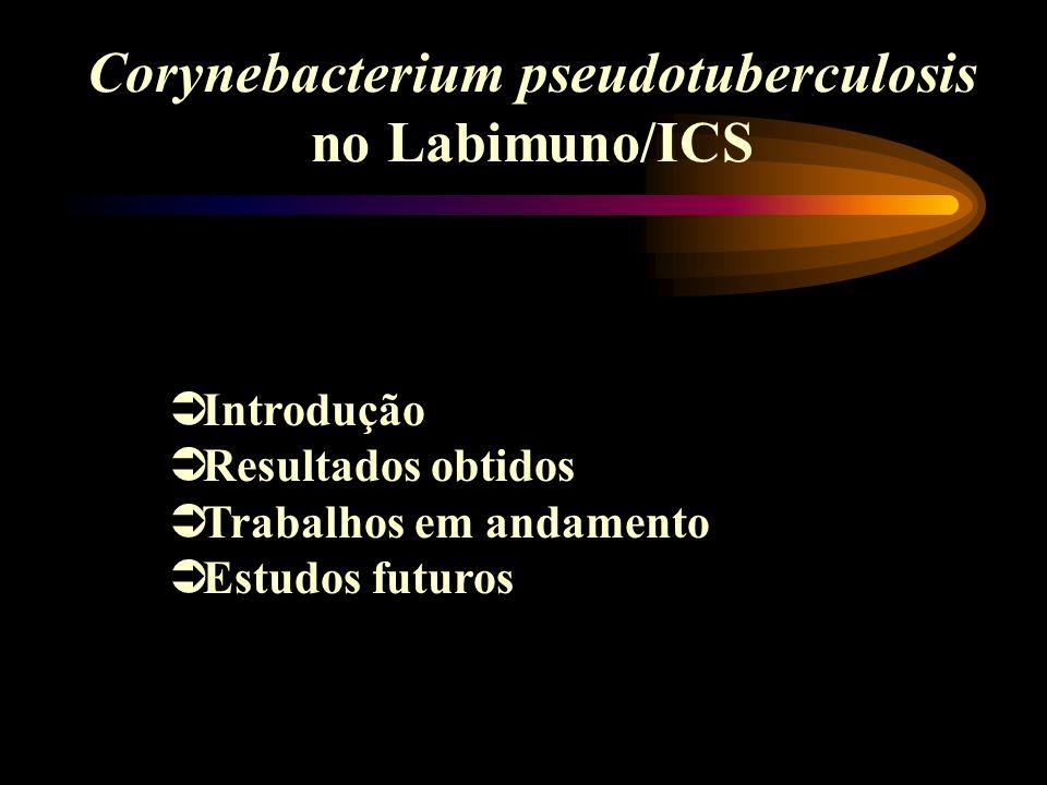 Corynebacterium pseudotuberculosis no Labimuno/ICS Introdução Resultados obtidos Trabalhos em andamento Estudos futuros