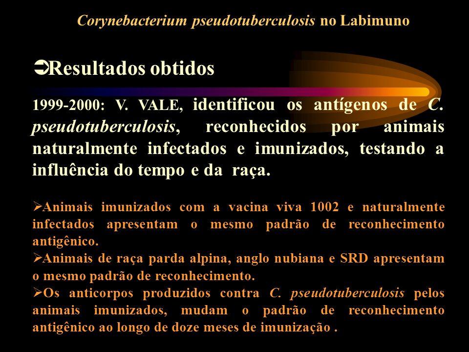 Resultados obtidos Corynebacterium pseudotuberculosis no Labimuno 1999-2000: V. VALE, identificou os antígenos de C. pseudotuberculosis, reconhecidos