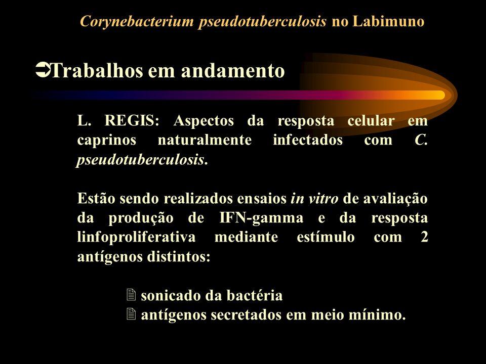 Corynebacterium pseudotuberculosis no Labimuno Trabalhos em andamento L. REGIS: Aspectos da resposta celular em caprinos naturalmente infectados com C