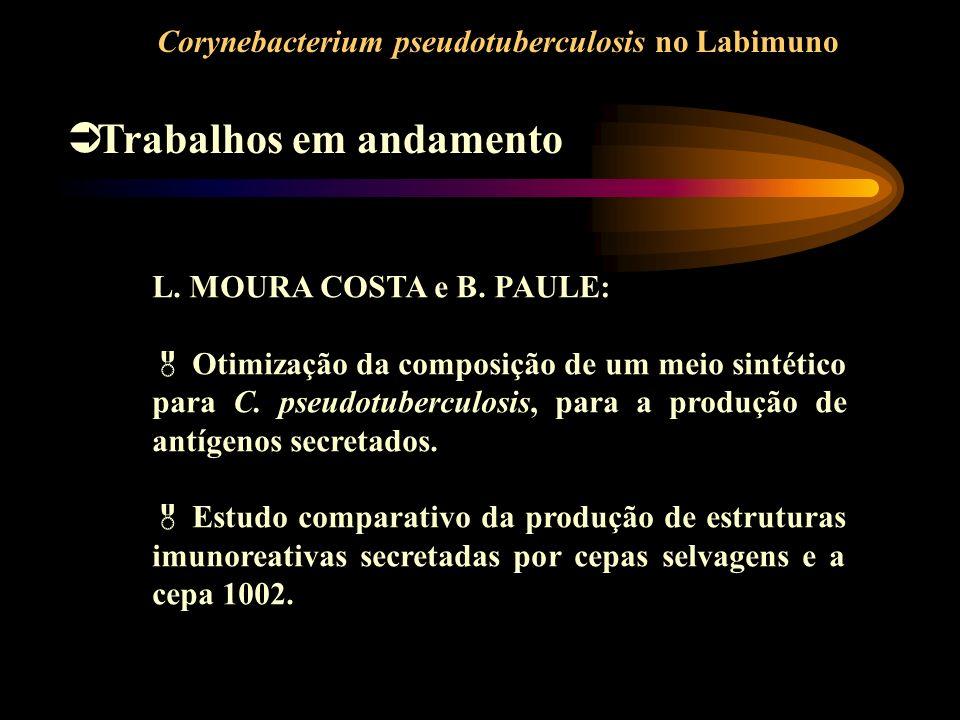 Corynebacterium pseudotuberculosis no Labimuno Trabalhos em andamento L. MOURA COSTA e B. PAULE: Otimização da composição de um meio sintético para C.