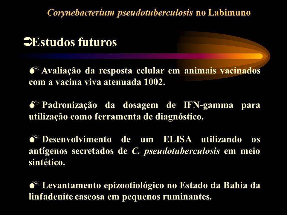 Corynebacterium pseudotuberculosis no Labimuno Estudos futuros Avaliação da resposta celular em animais vacinados com a vacina viva atenuada 1002. Pad