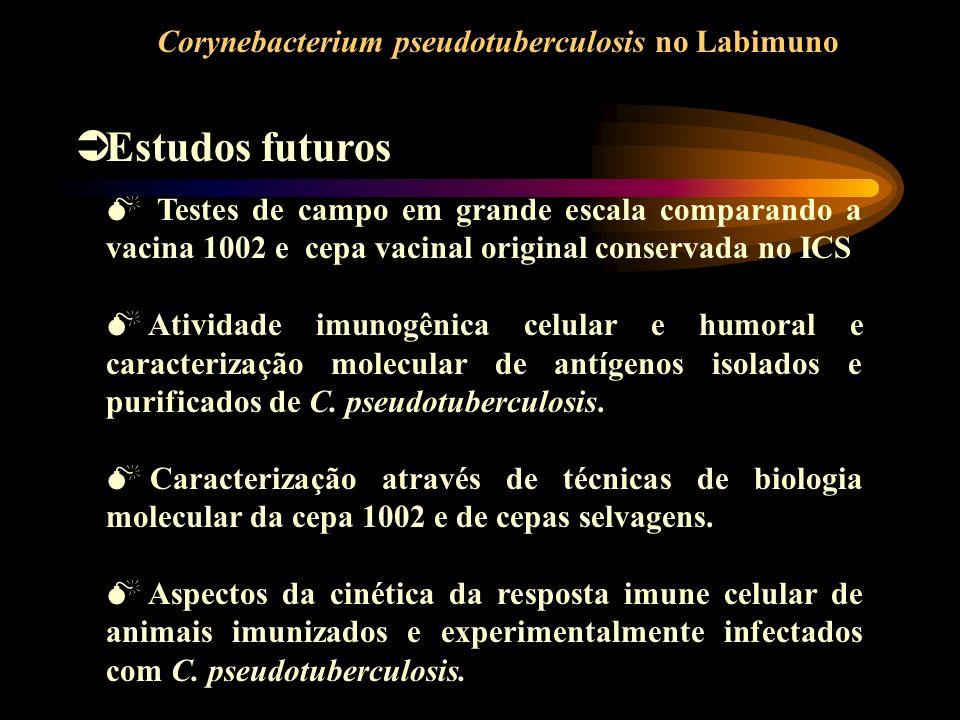 Estudos futuros Testes de campo em grande escala comparando a vacina 1002 e cepa vacinal original conservada no ICS Atividade imunogênica celular e hu