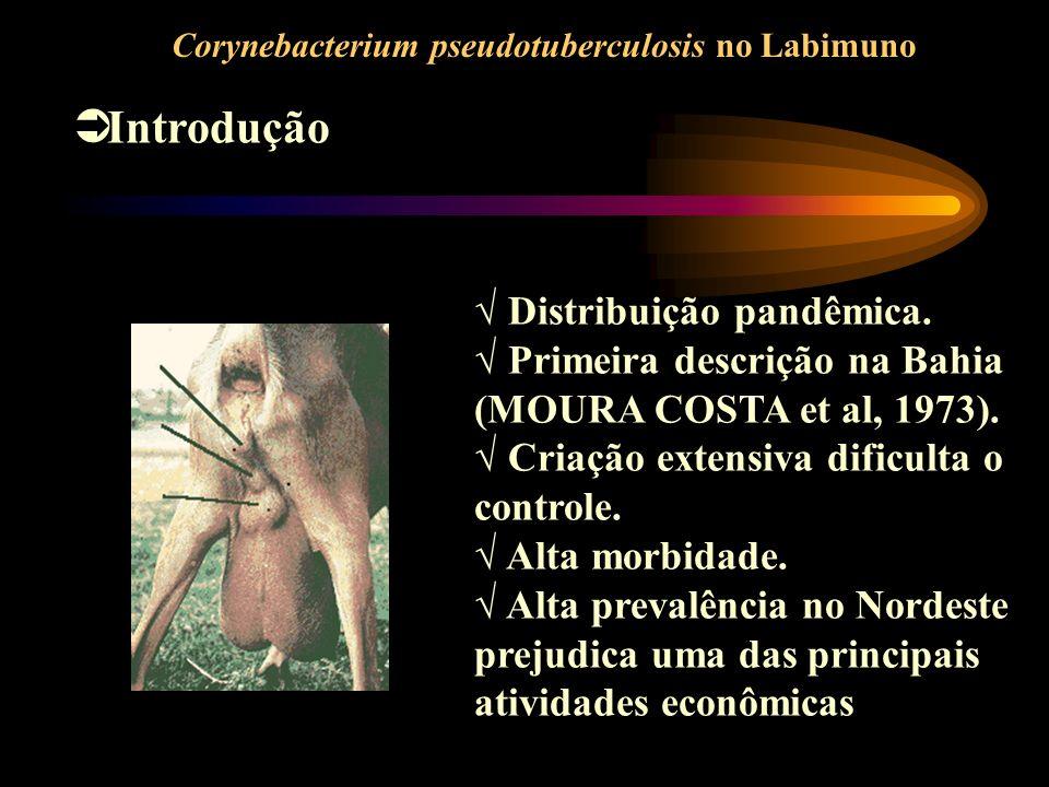 Introdução Corynebacterium pseudotuberculosis no Labimuno Distribuição pandêmica. Primeira descrição na Bahia (MOURA COSTA et al, 1973). Criação exten
