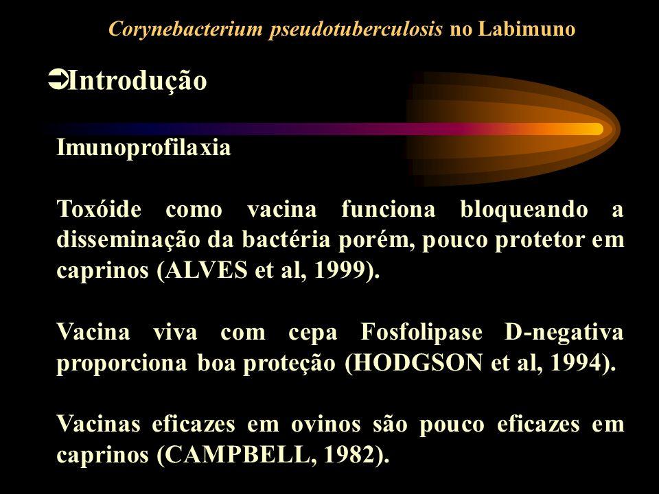 Introdução Corynebacterium pseudotuberculosis no Labimuno Imunoprofilaxia Toxóide como vacina funciona bloqueando a disseminação da bactéria porém, po