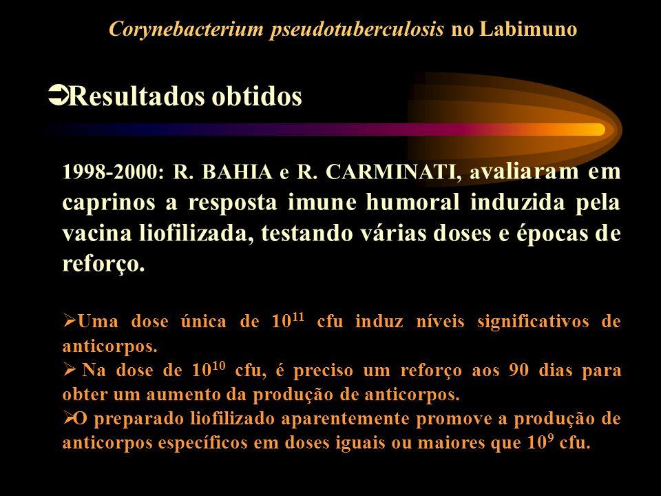 Corynebacterium pseudotuberculosis no Labimuno Resultados obtidos 1998-2000: R. BAHIA e R. CARMINATI, a valiaram em caprinos a resposta imune humoral