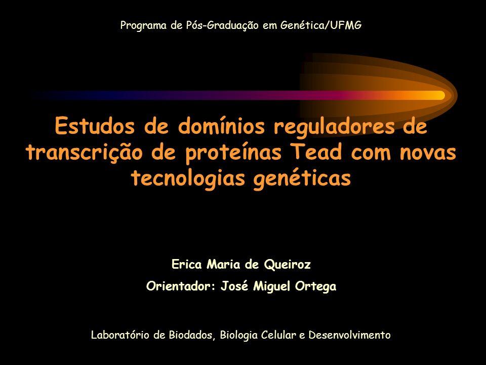 Programa de Pós-Graduação em Genética/UFMG Estudos de domínios reguladores de transcrição de proteínas Tead com novas tecnologias genéticas Erica Mari