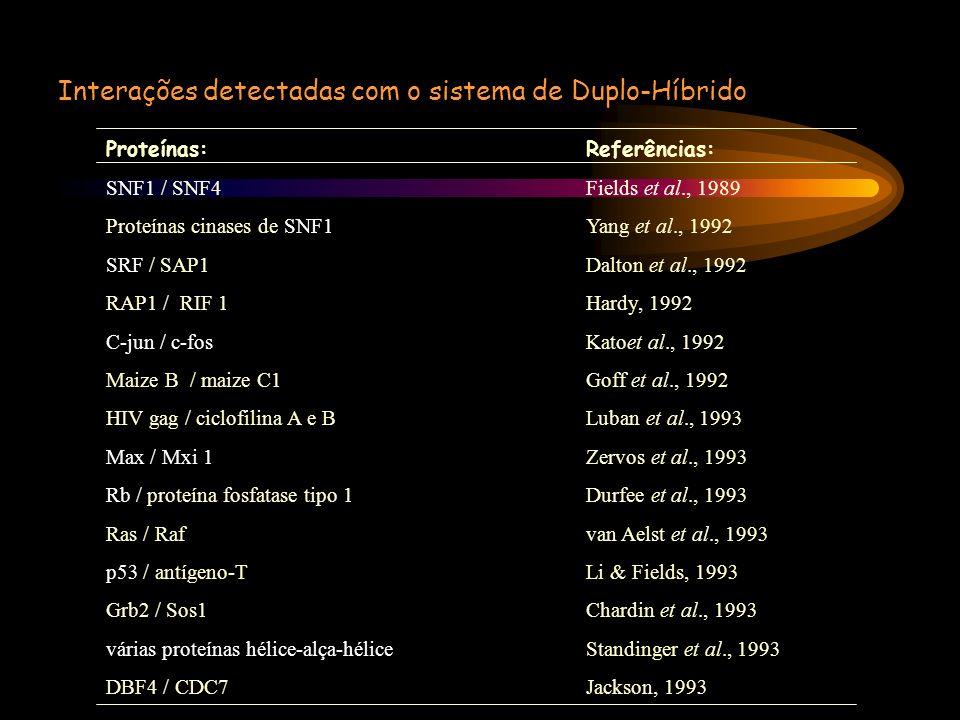 Interações detectadas com o sistema de Duplo-Híbrido Proteínas:Referências: SNF1 / SNF4Fields et al., 1989 Proteínas cinases de SNF1Yang et al., 1992