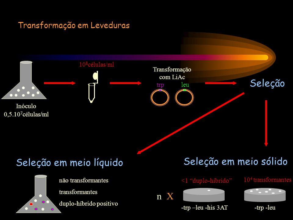 Transformação em Leveduras Seleção 0,5.10 7 células/ml Inóculo 10 8 células/ml Transformação com LiAc trp leu Seleção em meio líquido não transformant
