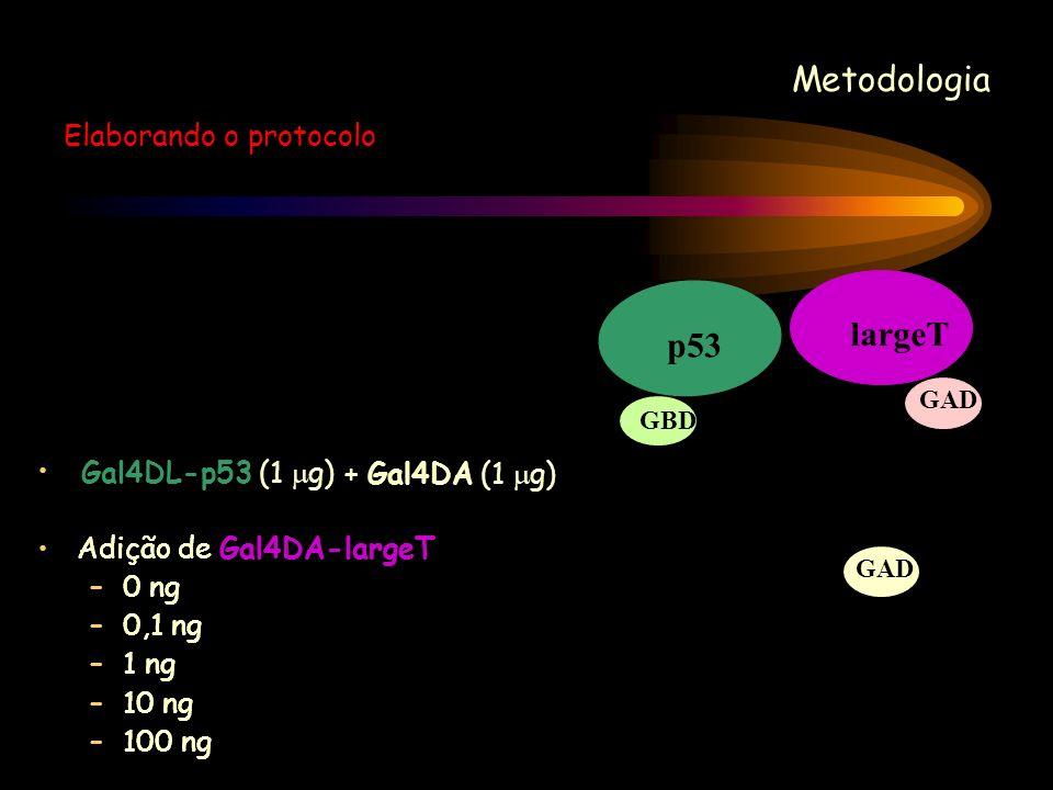 Metodologia Elaborando o protocolo p53 GBD Gal4DL-p53 (1 g) GAD + Gal4DA (1 g) Adição de Gal4DA-largeT –0 ng –0,1 ng –1 ng –10 ng –100 ng largeT GAD A