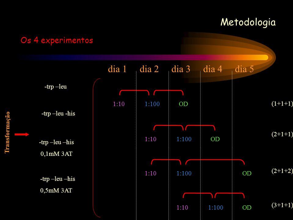 Metodologia Os 4 experimentos -trp –leu -trp –leu -his -trp –leu –his 0,1mM 3AT -trp –leu –his 0,5mM 3AT Transformação 1:101:100OD (1+1+1) 1:101:100OD