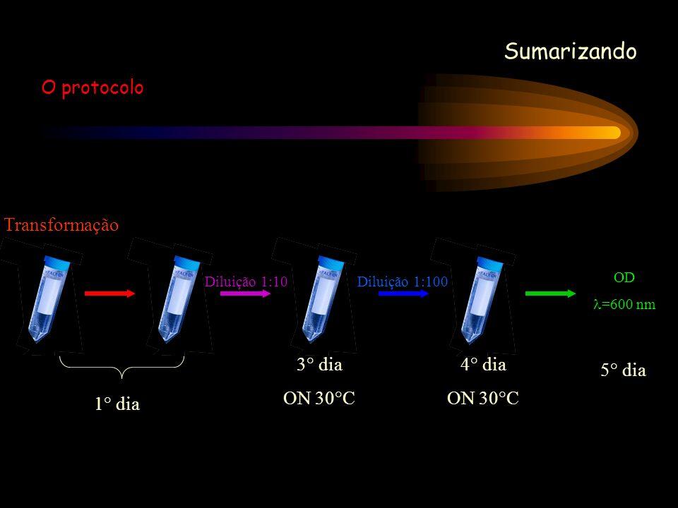 Sumarizando O protocolo OD =600 nm 5° dia Diluição 1:100 4° dia ON 30°C Diluição 1:10 3° dia ON 30°C Transformação 1° dia